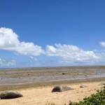 西表島 海