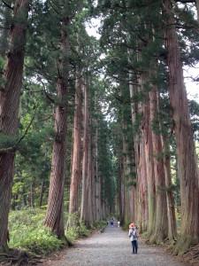 参道杉並木
