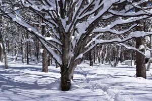 0781冬を楽しもう