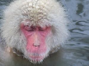 温泉お猿さん
