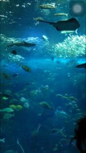 水族館②相模湾