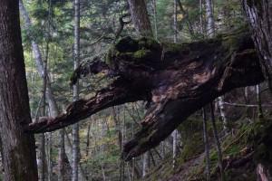童話の森13